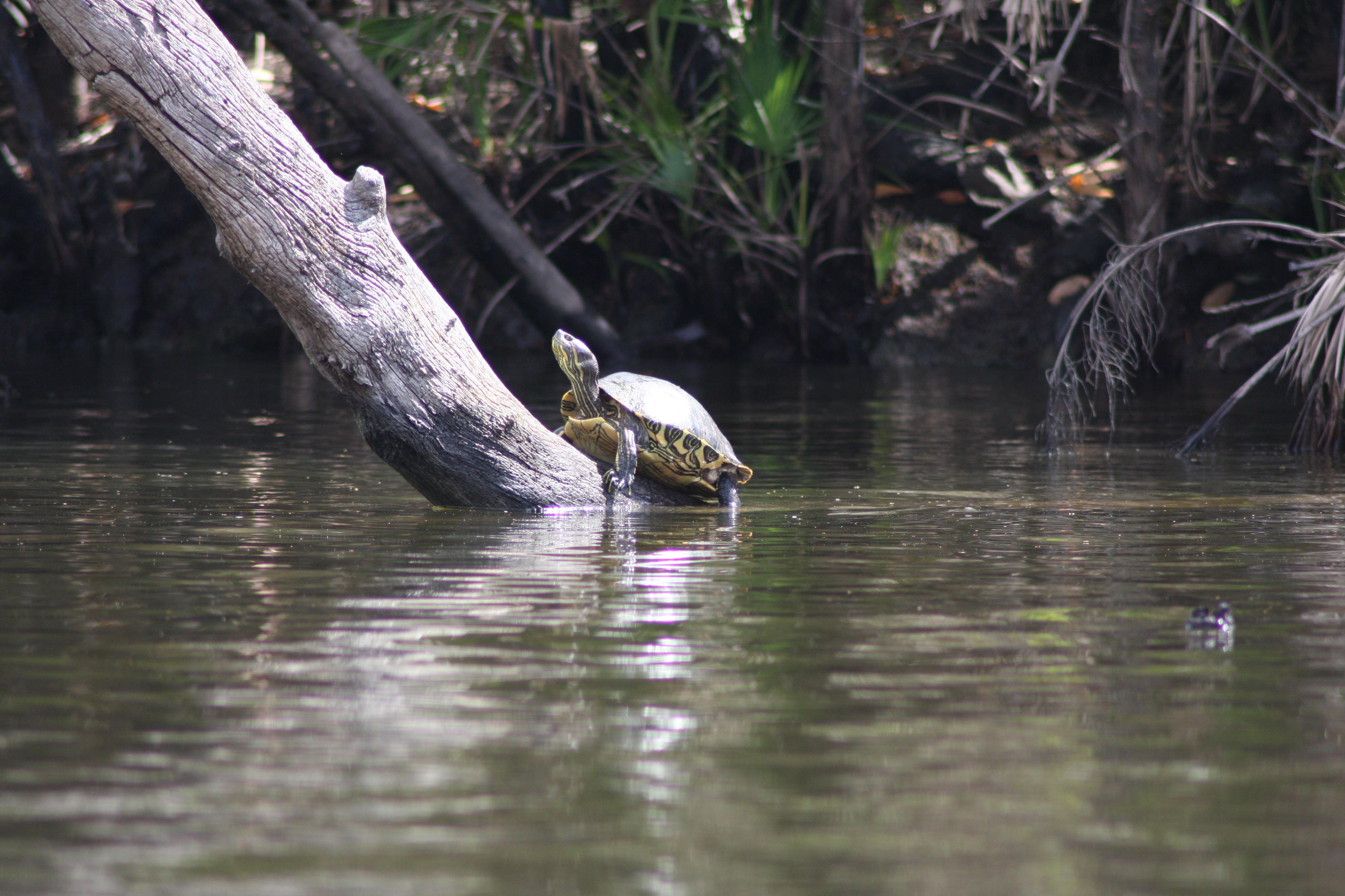 Turtle 2-15-09