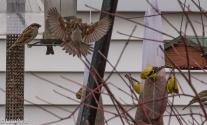 Yard Birds 04-15-18-9868
