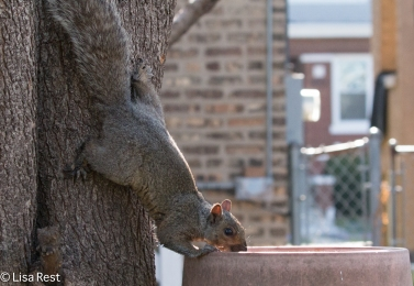 Squirrel 5-5-18-2361