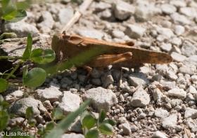 Grasshopper Portage 8-19-18-8163