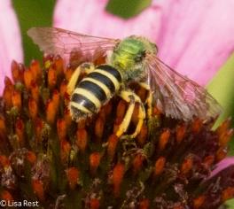 Pollinator Yard 8-18-18-7813