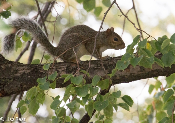 Squirrel Yard 8-18-18-7825