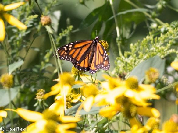 Monarch 9-2-18-8941