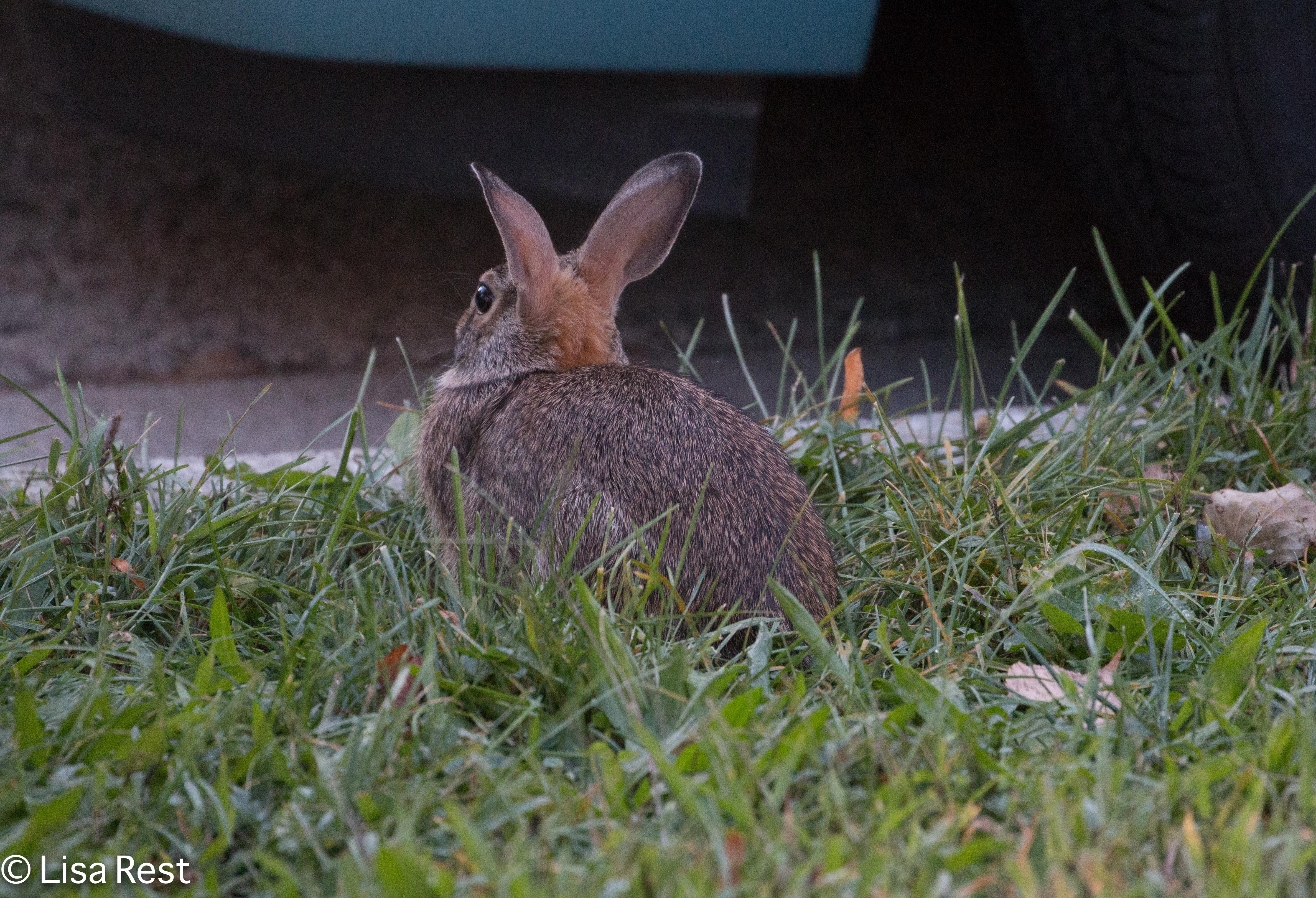 Rabbit 9-16-18-0273