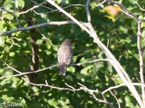 EAPH Thatcher Woods 9-29-18-0984