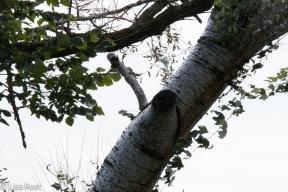 White Poplar Portage 9-29-18-1286