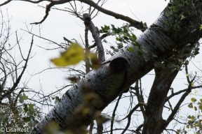 White Poplar Portage 9-29-18-1287